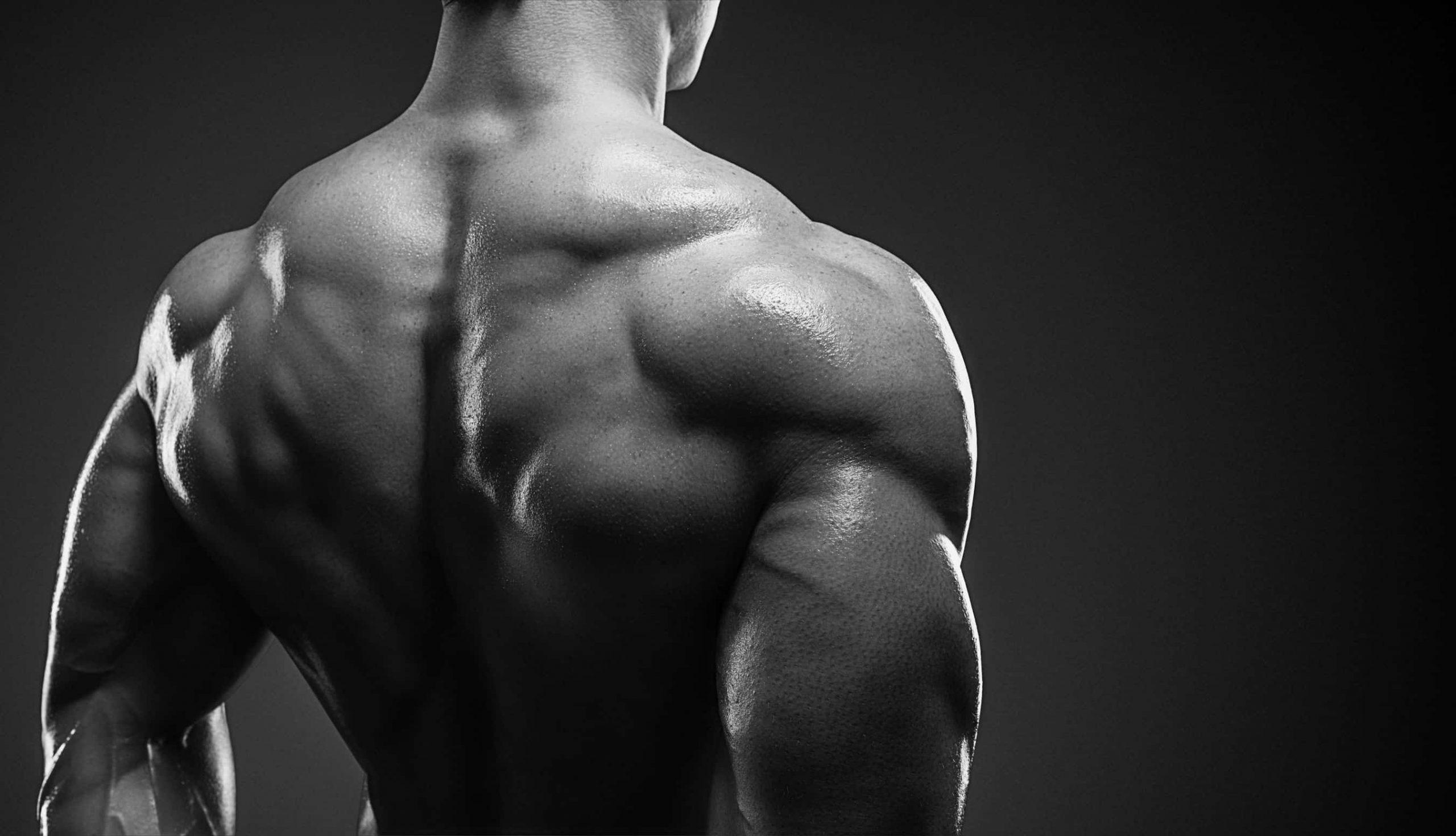 Muskelregeneration: Hintergrundwissen und Tipps für gesunde Muskeln