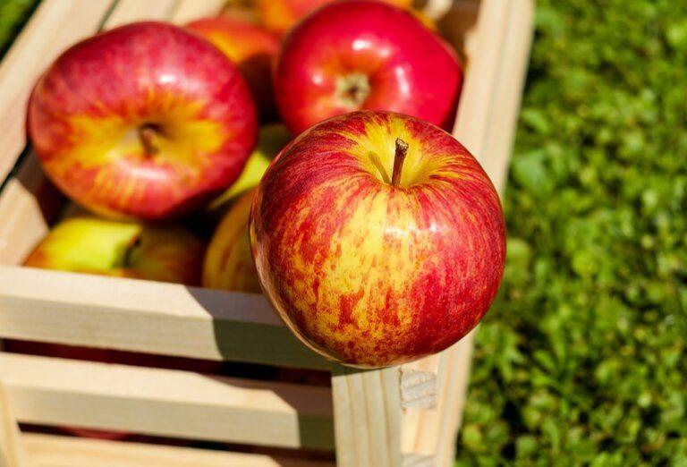 Apfelessig Diät-1