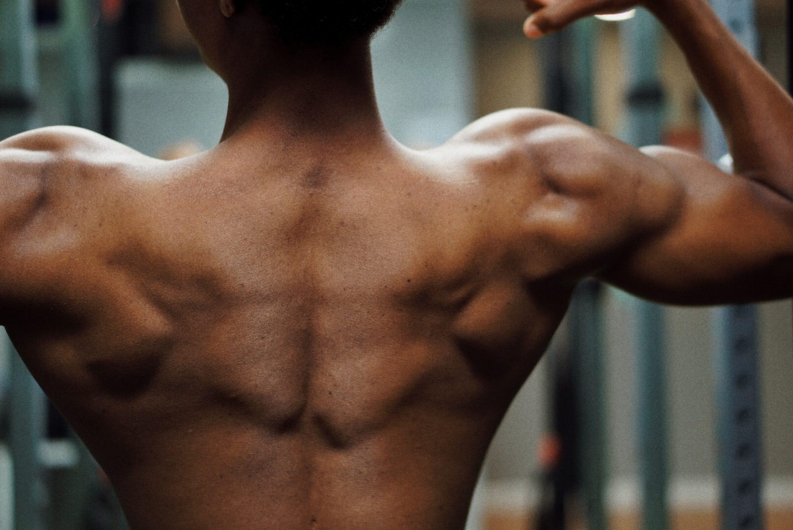 muskulatur-rücken